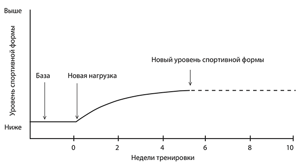 The figure below shows how the body responds to new stress.