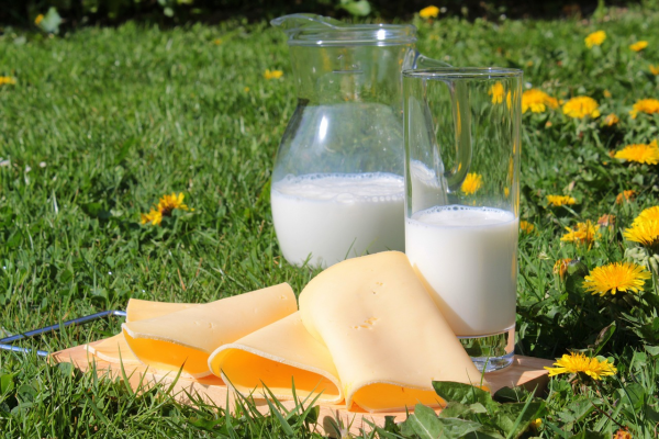Prohibited products include any products made from cow, goat and sheep milk: yogurt, cheese, milk, kefir, butter.